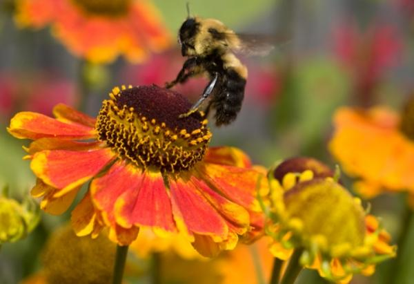 Pollinators: Creating Buzz Around Your Biz