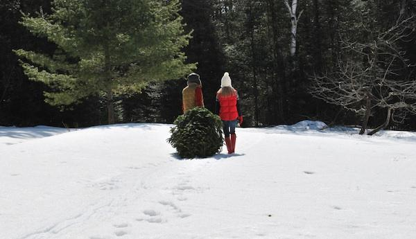 Christmas Trees Are a Big Small Business