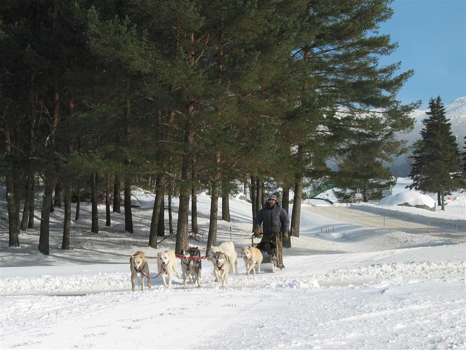 A dog-sledding business