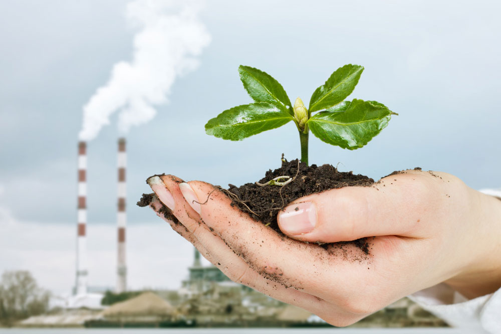 Environmental Disclosure Makes Companies Look Greener