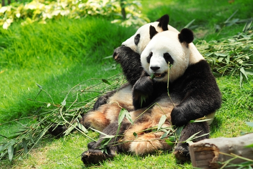 Will Google's Panda 3.9 Update Impact Your Business?