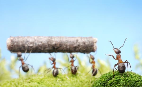Working ants - photo#10