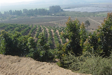 Avocado Farm – Chile