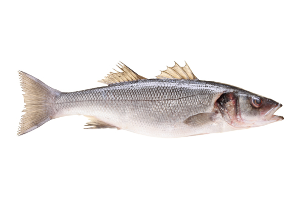 McLent? Fish Hits Fast Food Menus for Holidays