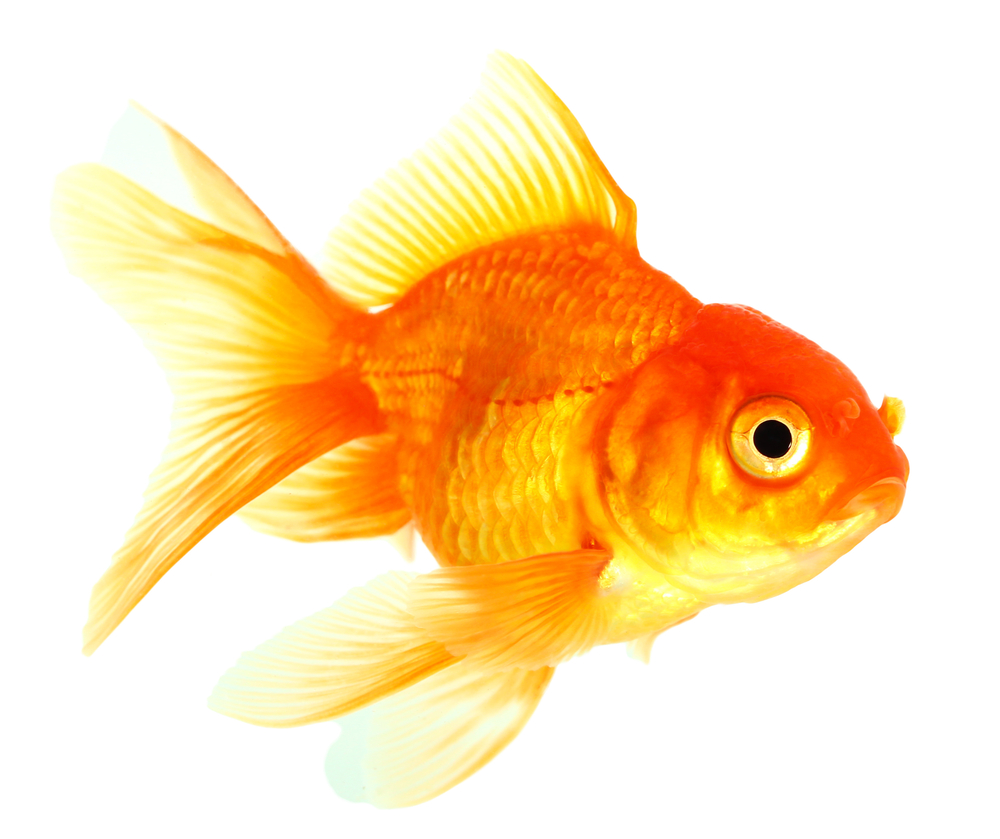 7 common causes of corporate culture crises for Can fish see water