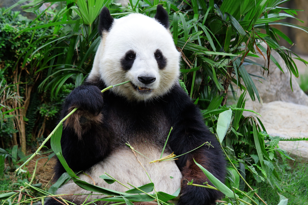 Google Panda 4.0: What Algorithm Update Means for Small Businesses