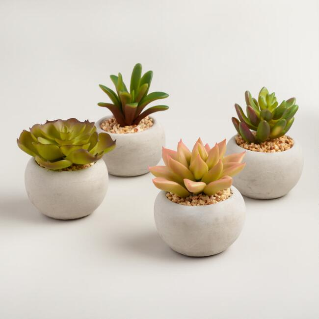 Mini Succulents, $16